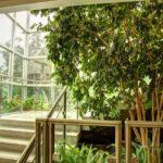 Urban jungle w domu, czyli roślinność w betonowej dżungli