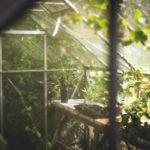 Szklarnie ogrodowe – jaką kupić? Przegląd rozwiązań i możliwości