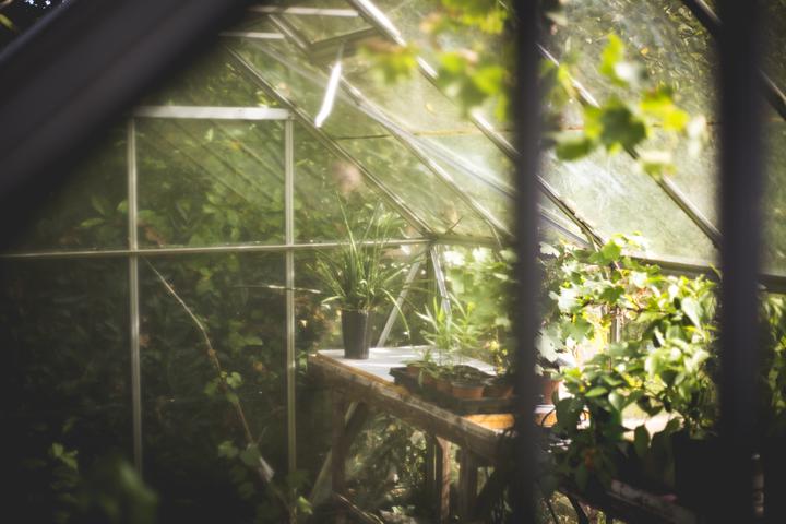 szklarnia ogrodowa jaką kupić