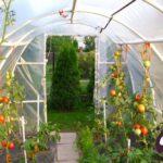 Zasady upraw roślin pod tunelem. Wskazówki dla domowych ogrodników