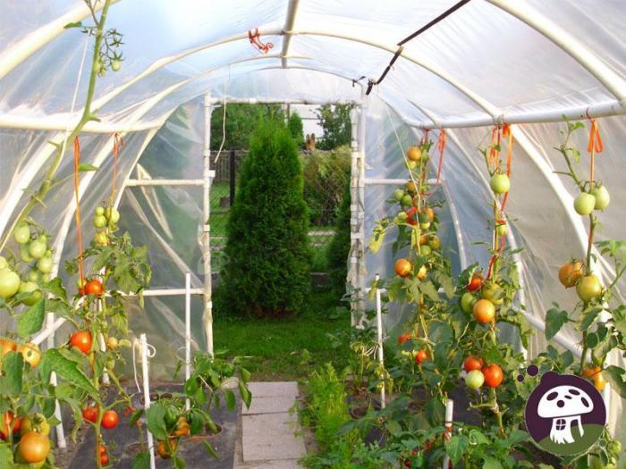 Uprawa warzyw w tunelach foliowych