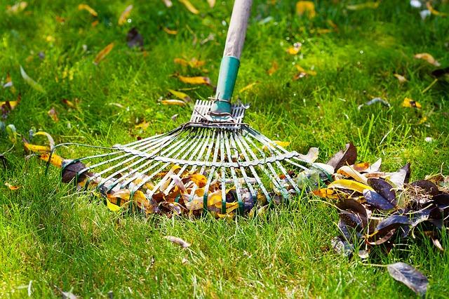 wiosenne porządki grabienie trawnika