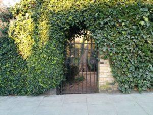 żywopłot płot prywatność w ogrodzie
