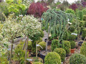 ogród donice na krzewy drzewa