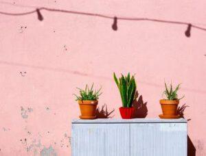 małe doniczki ogrodowe