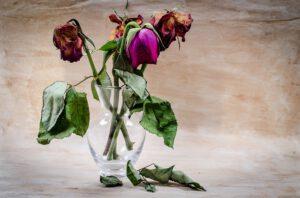 susza uschnięte kwiaty