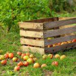 Skrzynki do ogrodu – jak je sprytnie wykorzystać?